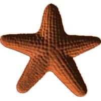 Starfish 213