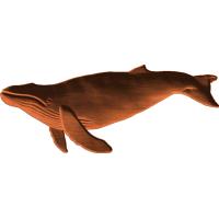 Whale 4x975 - 1