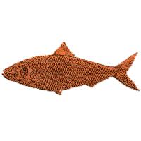 Fish, American - Shad
