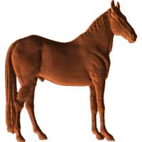 Horse - CL
