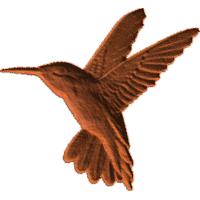 Hummingbird-CL