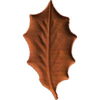 Leaf3 - CL