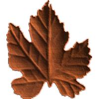 Leaf4 - CL