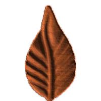 Leaf5 - CL
