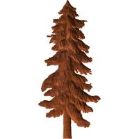 Fir Trees 3