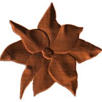 Clemitist flower