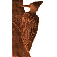 Woodpecker In Tree - KW