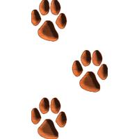 CatTracks