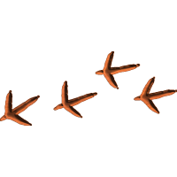 BirdTracks