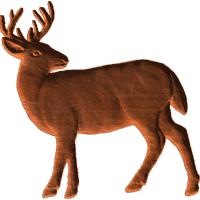 Buck 01