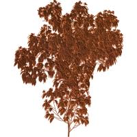 Leaf Tree 001