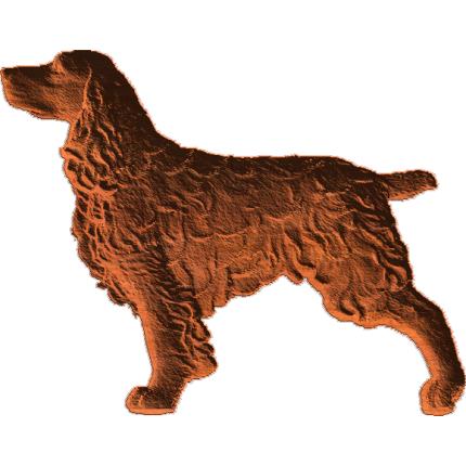 Springer Spaniel - Standing
