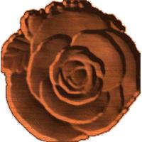 Rose & Leaves
