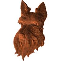 Scottish Terrier face