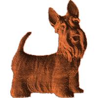 Scottish Terrier - AB - 001
