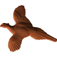 Plantation Pheasant