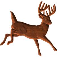 Buck - Male Deer