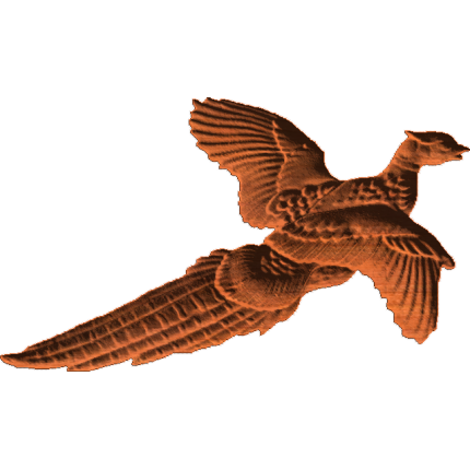 Pheasant 01 RNB
