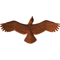 Eagle or Hawk Soaring