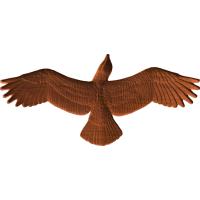 Eagle or Hawk Soaring