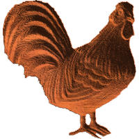 Rooster - AB - 001