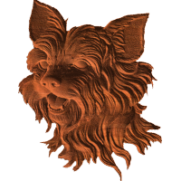 Yorkshire Terrier - Face - AB - 001