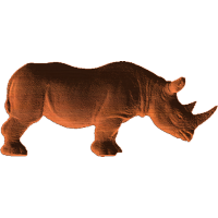 Rhinoceros - AB - 001