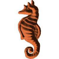Seahorse 244