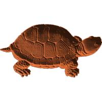 Turtle 413