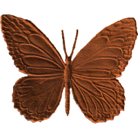 Butterfly - AB - 001