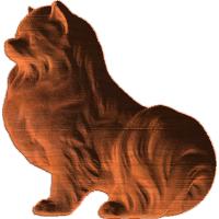 Pomeranian Sitting