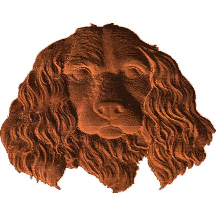 Cocker Spaniel Face