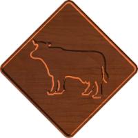 Cow Xing - CSF