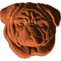 Pug Face - AB - 002