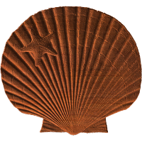 Scallop and Starfish