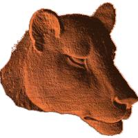 Lioness Head - AB - 001