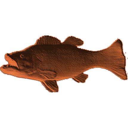 Fish - Ab - 001