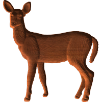 Young Deer Pattern